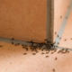 desinsekcija mravi
